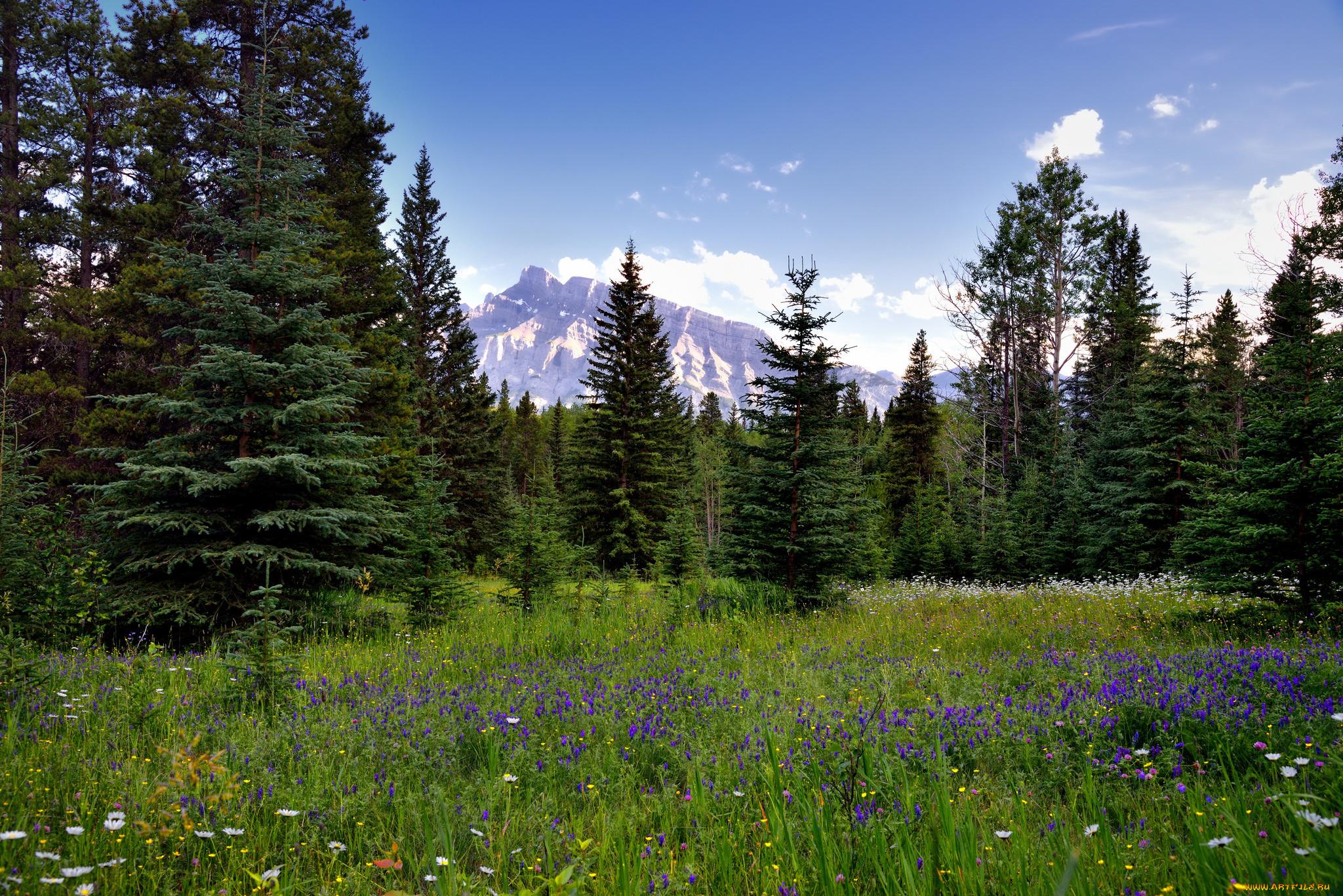 открытки лес поляна